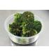Broccoli Side Dish